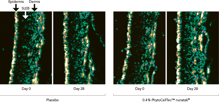 PhytoCellTec™ nunatak® Figure 2